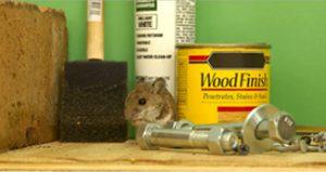 small animal with hardwares and paint products