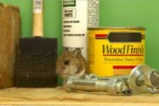 small animal with paint products and hardware